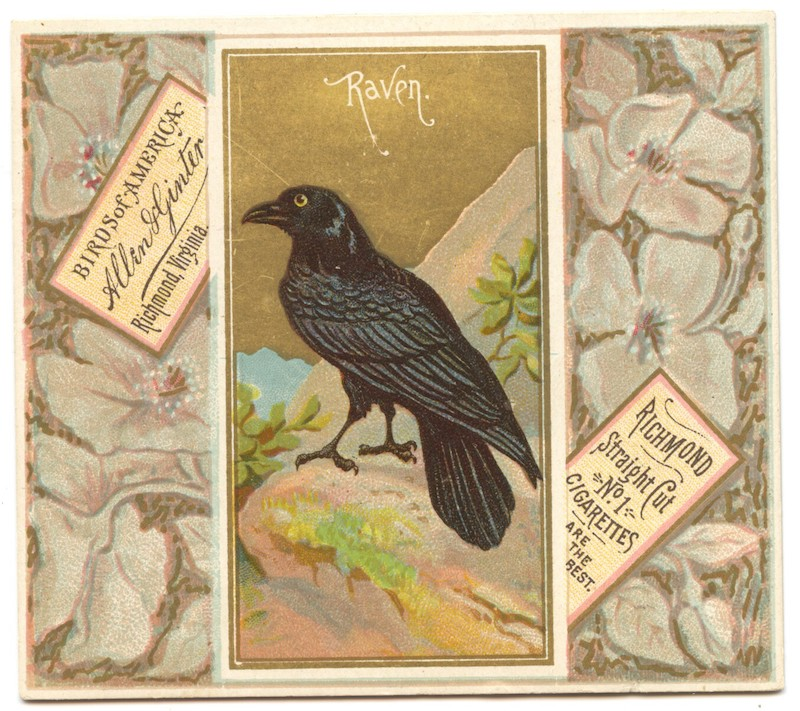 N37 Allen & Ginter Birds of American - Raven