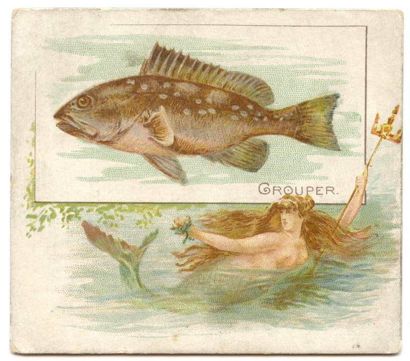 N39 Allen & Ginter Fish from American Waters - Grouper