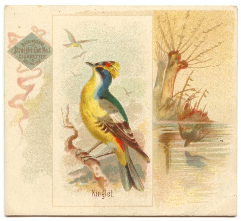 N42 Allen & Ginter Kinglet