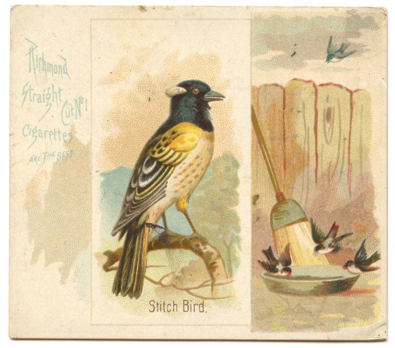 N42 Allen & Ginter Stitch Bird