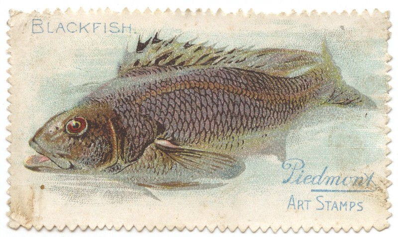 T330-4 Piedmont Art Stamps Fish Series Blackfish